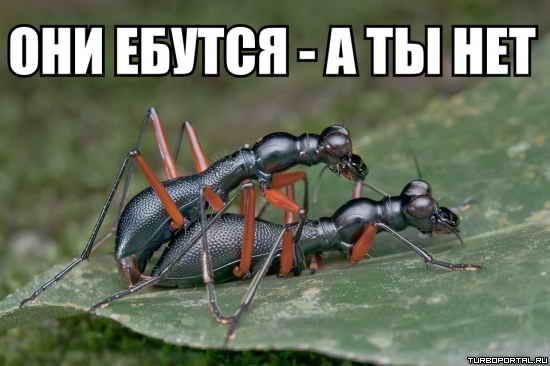 russkoe-foto-zhena-stala-prostitutkoy